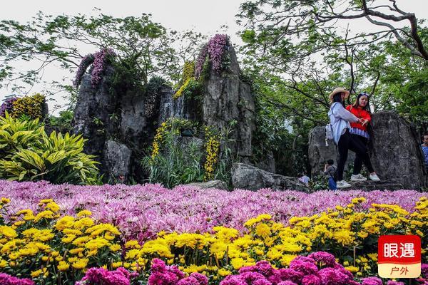 菊    香  —— 深 圳 东 湖 公 园 菊 展 随 拍